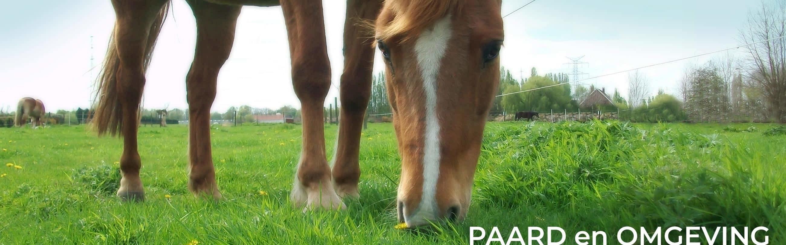 Equi Source paard en omgeving
