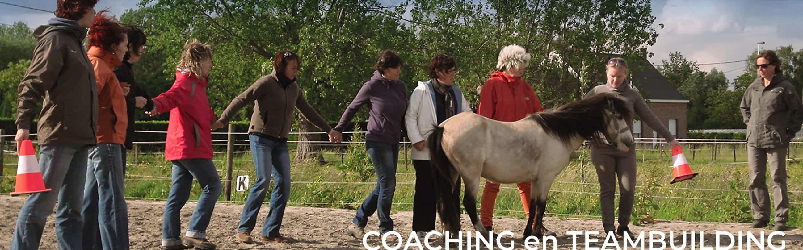 Equi Source coaching en teambuilding